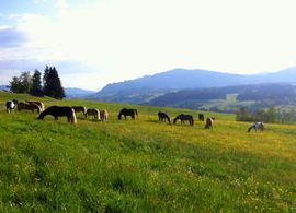 HIT Aktivstall Allgäu - Pferdepension Sinz -: Kleinanzeigen aus Weiler-Simmerberg - Rubrik Pferdeboxen, Stellplätze
