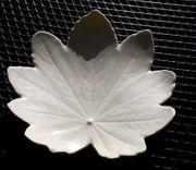 Antikes Porzellan Ahornblatt