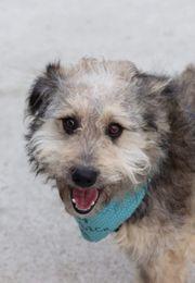 Tierschutzhund Max sucht ein tolles