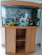Aquarium von Juwel 180 L
