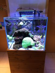 Meerwasser Korallen und Fische wegen
