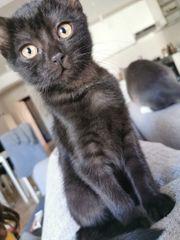 Katzenbaby 14 Wochen alt