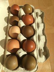 Easter Eggs Buntleger Bruteier Marans