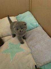 SKF BKH Kitten