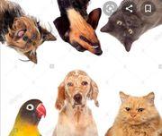 Tier Betreuung für JEDES Tier