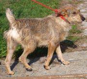 ZOA - Terrier Mix - sie ist