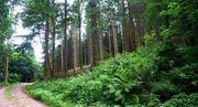 Walddeketive suchen Waldstück