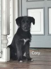 Kleiner CORY möchte dein Herz