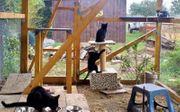 Junge Kätzchen suchen dringend ein