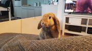 2 Kaninchen alles