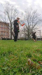 Hundesitting Gassiservice Beratung Sozialisierung Welpenschule