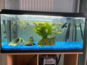 zu verkaufen 240 lt Aquarium