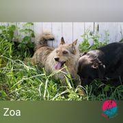 Zoa- Strubbelprinzessin auf der Suche