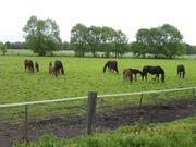 suche Einstellplätze für 2 Pferde