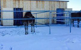 Pferdeboxen, Stellplätze - Einstellplatz zu vergeben