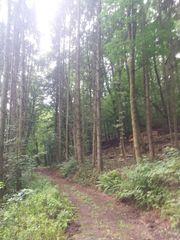 Brennholz bei Annweiler Pfalz