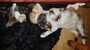 4 Kitten Schlümpfe suchen Ihre