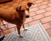 Suche liebevolle Hundebetreuung