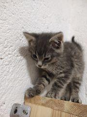 Wunderschöne Kätzchen