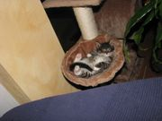Mobile Katzenbetreuung in Winnenden und