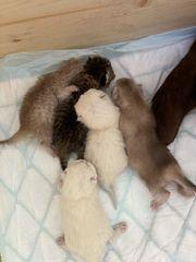 5 Kitten suchen ein neues
