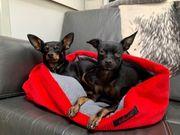 Schlafsack für Katzen u Hunde