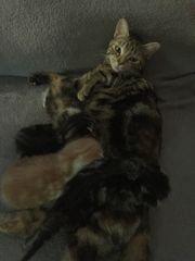 kitten am 5 7 geboren