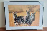Wandbild Zebra