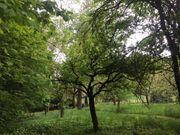 Garten und Freizeitgrundstück eingezäunt mit