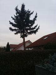 Sturmschaden Ast abgebrochen oder Baum