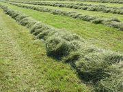 Suche Wiesen Ackerland zur Bewirtschaftung