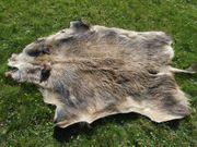 Wildschweinschwarte