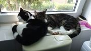 Junge kater
