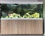 Aquarium 1000 Liter zu verkaufen