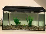 Aquarium ca 60 Liter