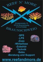 Einsiedlerkrebs - Clibanarius Sp Wirbellose Meerwasser