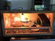 griechischen landschildkröten mit Terrarium