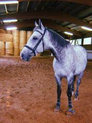 Reitbeteiligung an Pferd zu vergeben