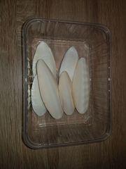 Sepia Schalen 6-8 Stück 40g