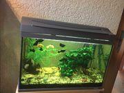 Aquarium 60 l - mit Fischen