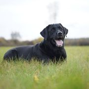Hundepension Tierpension und Tagesbetreuung