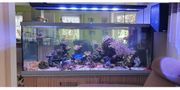 Meerwasser Aquarium Weissglas