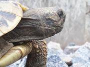 Schildkröte thb 2014