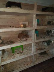 Eigenbau der Firma Kleintiervilla abzugeben