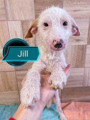 Jill sucht ihr Zuhause
