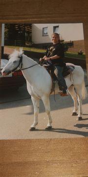 Ponysuche 0901