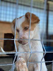 Hundekind ADELE sucht ein Schmuseplätzchen