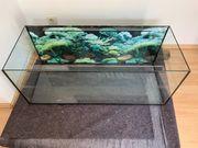 Aquarium oder Wasserbecken für Wasserschildkröten