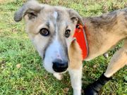 Hundemädchen Ashanti querschnittsgelähmt sucht tolles