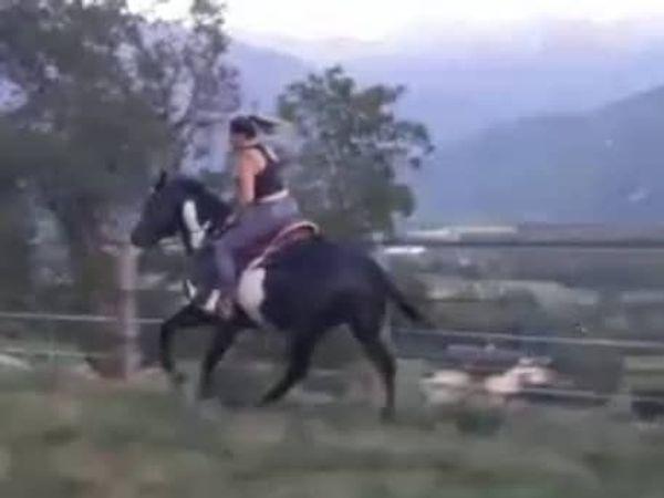 Paint-Horse -ein Wallach - braves Freizeitpferd